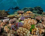 Videographic 50 san hô biến mất trong 30 năm đe doạ cuộc sống con người