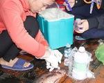Cá, mực nuôi ở Vũng Áng chết do thiếu oxy cục bộ