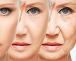 Videographic tại sao con người lại già đi?