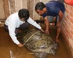 Ngư dân bắt được con vích nặng khoảng 200kg