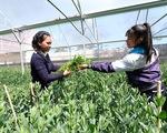 Học ngay từ vườn rau công nghệ cao