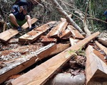 """Kiên quyết xóa bỏ các """"điểm nóng"""" về phá rừng"""