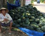 Quảng Nam: Sở Nông nghiệp gửi thư kêu gọi mua dưa hấu giúp nông dân