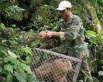 Thả động vật quý hiếm về rừng Phong Nha