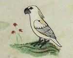 Bức họa con vẹt 700 tuổi hé lộ tuyến đường thương mại thời Trung cổ