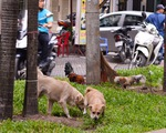 Chó ở chung cư: Chỉ được nuôi chó nhỏ?