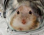 Mỹ đưa 20 chú chuột lên Trạm không gian quốc tế