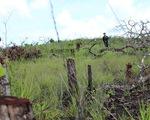 Cán bộ, vợ con nhận đất rừng trái quy định nhiều năm chưa chịu trả