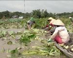 Lũ đồng bằng sông Cửu Long lên nhanh, nhiều nơi bị thiệt hại