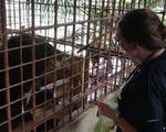 Người dân tặng 5 con gấu ngựa cho Tổ chức Động vật châu Á