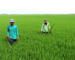 Nông nghiệp không hóa chất vẫn sống khỏe