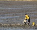 Nông sản chưa sạch, lỗi không chỉ nông dân