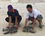 Thả hai con vích quý hiếm về với biển Hòn Cau