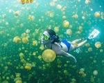 Hồ sứa tuyệt đẹp ở Palau