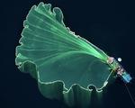 """""""Hoa lưới"""" tại Phú Yên đoạt giải nhì cuộc thi ảnh flycam quốc tế"""