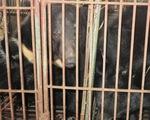 Khóa học thạc sĩ đầu tiên chống buôn bán động vật hoang dã