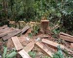 Rừng phòng hộ Krông Pha bị phá