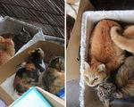 Người Nhật giải cứu đảo mèo Okishima giữa bão Hagibis chỉ là tin vịt