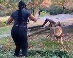 Du khách vượt rào chắn, ghẹo sư tử trong sở thú