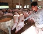 Giá heo hơi sắp chạm ngưỡng 100.000 đồng/kg, Bộ Nông nghiệp nói gì?