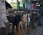Dân Campuchia vừa mổ chó vừa van nài:
