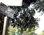 Đặt tên đường 2 giáo sĩ: chờ tranh luận ngã ngũ