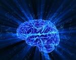 Chuẩn bị cho dân số già, Singapore lập Ngân hàng não