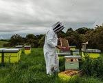 Tranh chấp quyết liệt vì loại mật ong thần dược