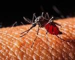 Văcxin sốt xuất huyết giúp giảm tỷ lệ nhập viện đến 95%