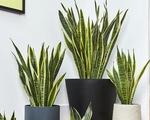 Không khí ô nhiễm, trồng cây trong nhà hay mua máy lọc?