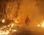 Úc ban bố tình trạng khẩn cấp khi cháy rừng lan tới Sydney