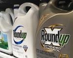 Úc xử vụ dân kiện tập thể về thuốc diệt cỏ của Monsanto gây ung thư