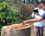 Thanh tra vụ đốn hạ cây rừng tự nhiên trong khu bảo tồn ở Đồng Nai