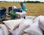 Lúa gạo nhiều, giá giảm: Không thể 'giải cứu' mãi