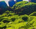 Bãi rêu