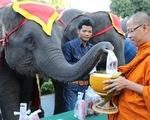 Ngày voi quốc gia Thái Lan: tắm, chơi và ăn rau quả