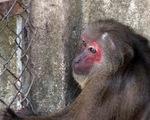 Giao 6 con khỉ quý hiếm cho cơ sở bảo vệ động vật hoang dã