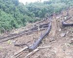 Lập khống hồ sơ chiếm tiền đền bù, 2 cán bộ quản lý rừng bị bắt