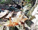 Hoàn chỉnh hồ sơ khởi tố hình sự vụ phá rừng Phong Nha - Kẻ Bàng