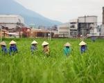 Doanh nghiệp mía đường Việt mở rộng thị trường Đông Dương