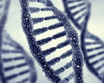 Phát hiện kiểu gen tác động đến hạnh phúc vợ chồng