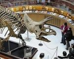 Chuyện gì xảy ra vào ngày khủng long tuyệt chủng?