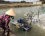 Hoa Kỳ công bố thuế chống bán phá giá tôm Việt Nam còn 0%