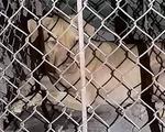 Đang dọn vệ sinh tại trường, nữ lao công bị chó cắn nguy kịch