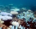 Rạn san hô lớn nhất thế giới