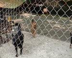 Chó cắn chết người, chủ nuôi phải bị xử lý hình sự