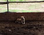 Chú chó giúp phát hiện thi thể bé trai 2 tuổi mất tích ở Bình Thuận