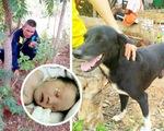 Chú chó 3 chân cứu sống bé trai sơ sinh bị 'mẹ nhí' 15 tuổi chôn sống