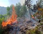 Hơn 900 người chữa cháy rừng ở Nghệ An trong đêm