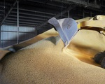 Bất ngờ trước G20, Mỹ công bố Trung Quốc mua 544.000 tấn đậu nành